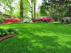 Качественный рулонный газон под ключ